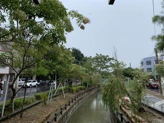 新營美術園區「綠川廊道」完工倒數 黃偉哲:不輸台中綠川