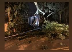 汽車疑過彎太快失控 離奇飛掛樹上