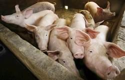 加強監督非洲豬瘟力道 查獲案件核發20﹪獎金予檢舉人