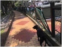寵物公園圍欄鏽蝕傾倒 議員為桃園毛小請命