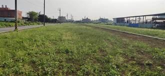 防疫活動取消 農民一年少進帳80萬 草花田成雜草堆