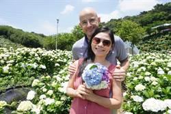 萬里8000坪高家繡球花綻放迎開幕 邀吳鳳拍片行銷