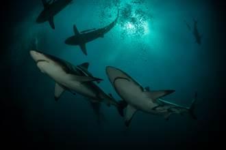出海衝浪遭20條鯊魚包圍 驚悚面對面嚇呆