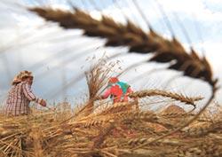 疫情打亂全球供應鏈 FAO:新興國家陷糧食危機