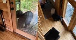 渡假遇搶劫!黑熊闖入掃光可樂、洋芋片 還有3隻門外把風