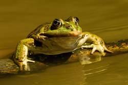 青蛙一秒捕食甲蟲 結局竟精彩反轉