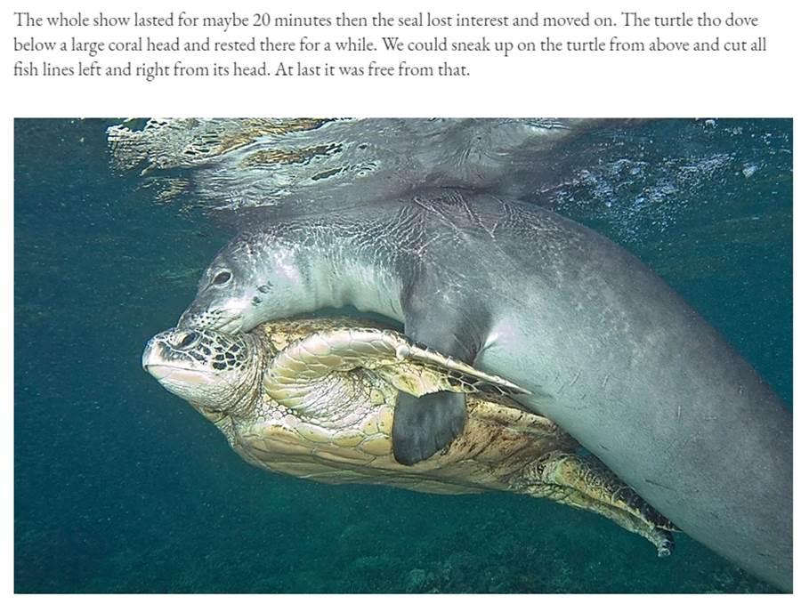 一張海豹抱海龜的圖,考倒不少考生,其實該題是17年台媒曾引起熱議的爭議新聞,考驗學生對假新聞的判讀能力 (圖/翻攝自Beat Korner部落格)