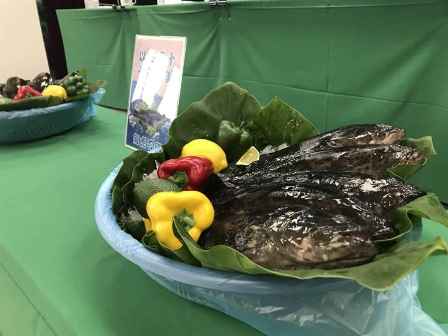 疫情記者會中端出由漁業署十條石斑魚,象徵「以石慶十,十全十美」。(鄭郁蓁 攝)