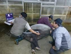 如願當了獸醫卻後悔?原來他希望看到動物都能很健康