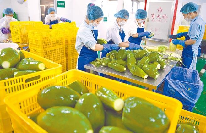 新亞高農業公司工人們忙著將蔬菜加工打包。