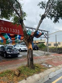台中清晨風強雨驟 同路段連2天行道樹倒塌