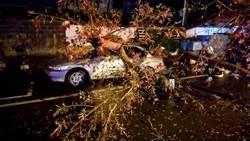 台南路樹倒塌壓毀汽機車 女騎士送醫不治