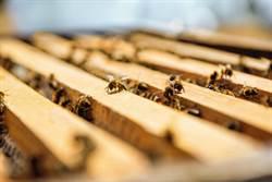 喜迎520世界蜜蜂日 美妝業者祭好禮