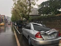 路樹壓死人 台南市要求校園全面盤點樹木狀況