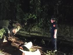 梅雨帶來苗縣強降雨 南庄鹿場21線路樹倒塌警方協助移置