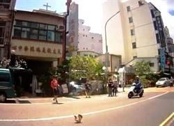 警察「捉雞」很拿手 當街「抓真雞」手忙腳亂