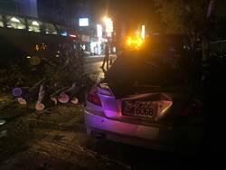 路樹壓死人 南市「路樹倒伏處理平台」將建立路樹倒塌SOP