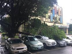 台南才壓死騎士 桃公所大榕樹倒塌壓2轎車