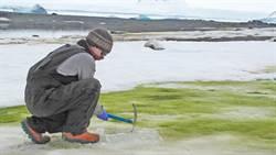 暖化影響 南極出現綠苔原