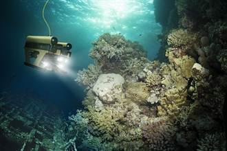 深海拍到罕見生物 竟像鹿又像豬?