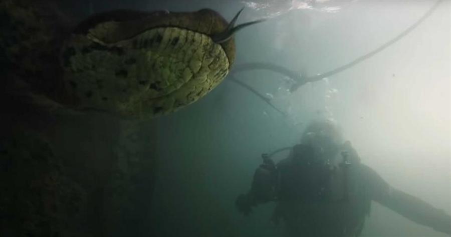 一名潛水員巧遇一條長達7公尺、重達90公斤的綠水蟒。(圖/翻攝自YouTube/ Newsflare)