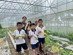 官小學童花4個月培育小黃瓜新品種 「官甜1號」盼年底量產