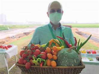 抗熱耐蟲害產量大 亞蔬發表200種番茄、甜椒新品種