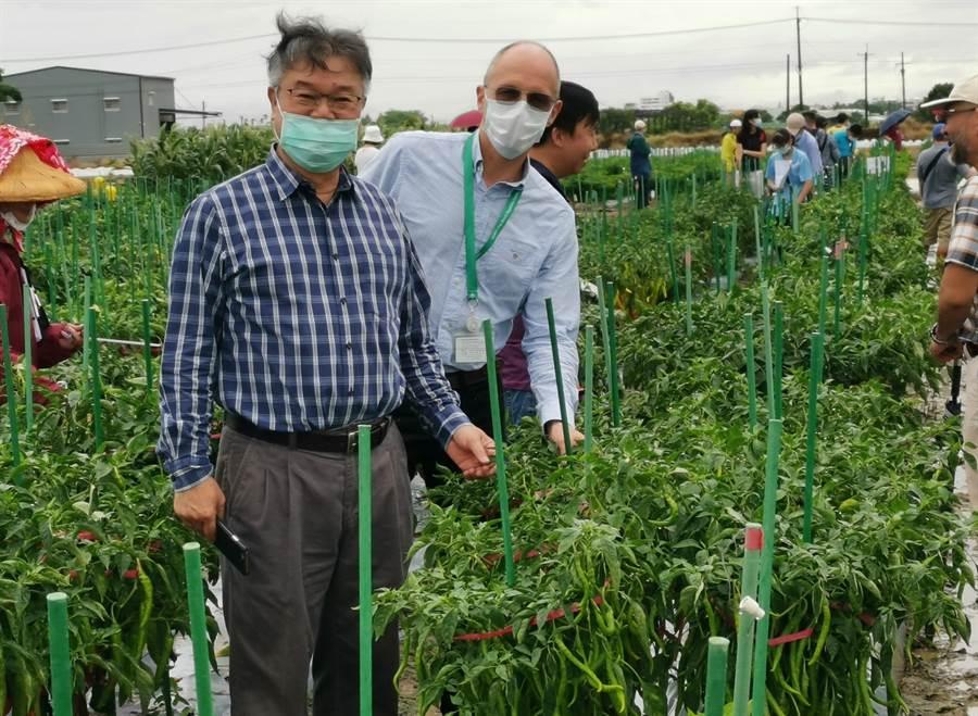 亞蔬世界蔬菜中心發表200多種新蔬菜品種,並舉辦田間觀摩活動,亞蔬主任沃培睿(右)、副主任張瀛福下農場解說。(劉秀芬攝)