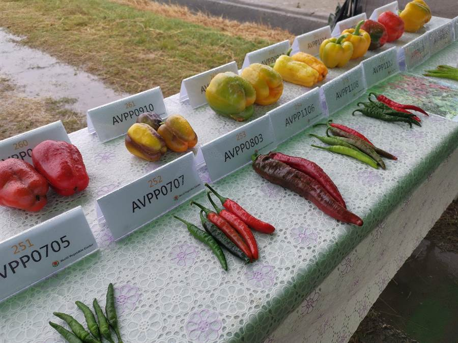 亞蔬世界蔬菜中心21日發表200多個番茄、辣椒、甜椒、南瓜等新蔬菜品種。(劉秀芬攝)