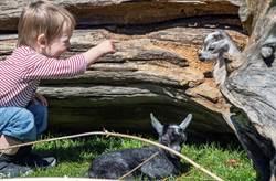 丹麥提早18天解封 動物園博物館開心迎客