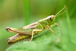 養300隻昆蟲「當零食」 26歲正妹護士:蟑螂口感像蝦子