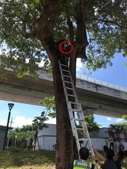 浪貓困樹上 警不放棄救援供食祝脫困