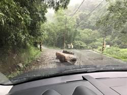 南庄山區豪雨 造成大石鬆落砸路面
