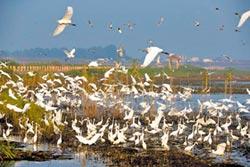 鄱陽湖區撐起夏候鳥保護傘