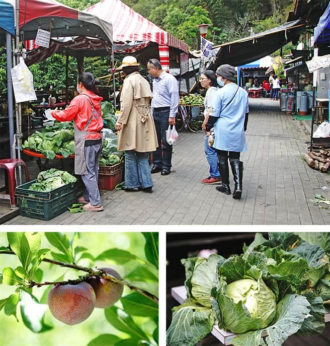 梅山小農市集採買高山高麗菜、當季蔬果,支持好農物。(攝影/曾信耀/Takao樂高雄/提供)