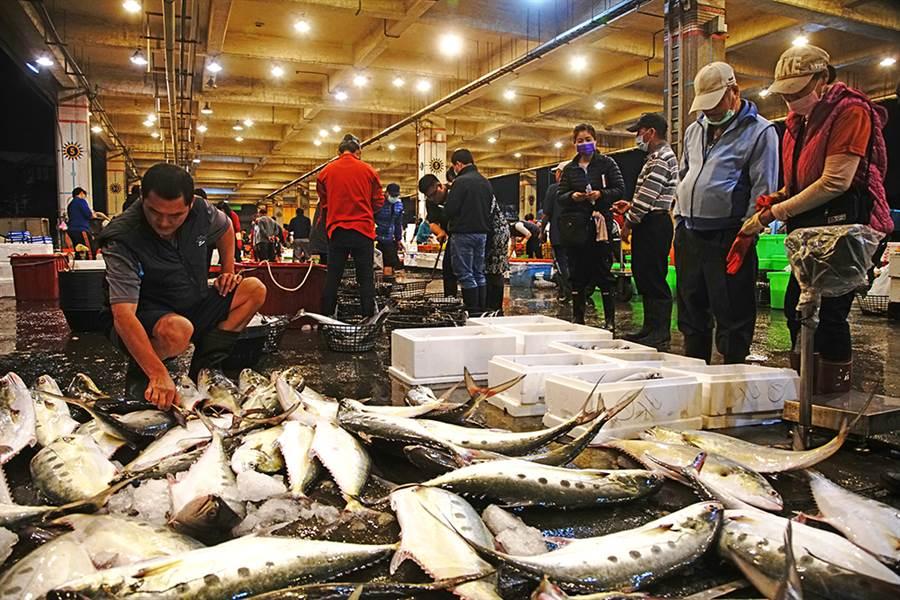 前鎮魚市場是大盤商的分銷地,現場可以看到許多攤販、廚師來挑選海鮮。(攝影/曾信耀/Takao樂高雄/提供)