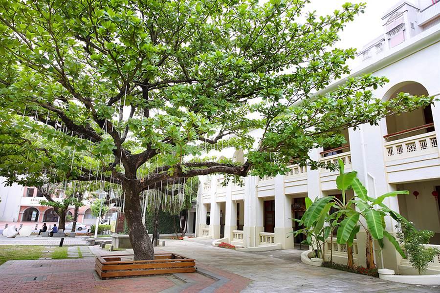 校舍中庭一棵老樹屹立,見證過往歷史。(攝影/Carter)