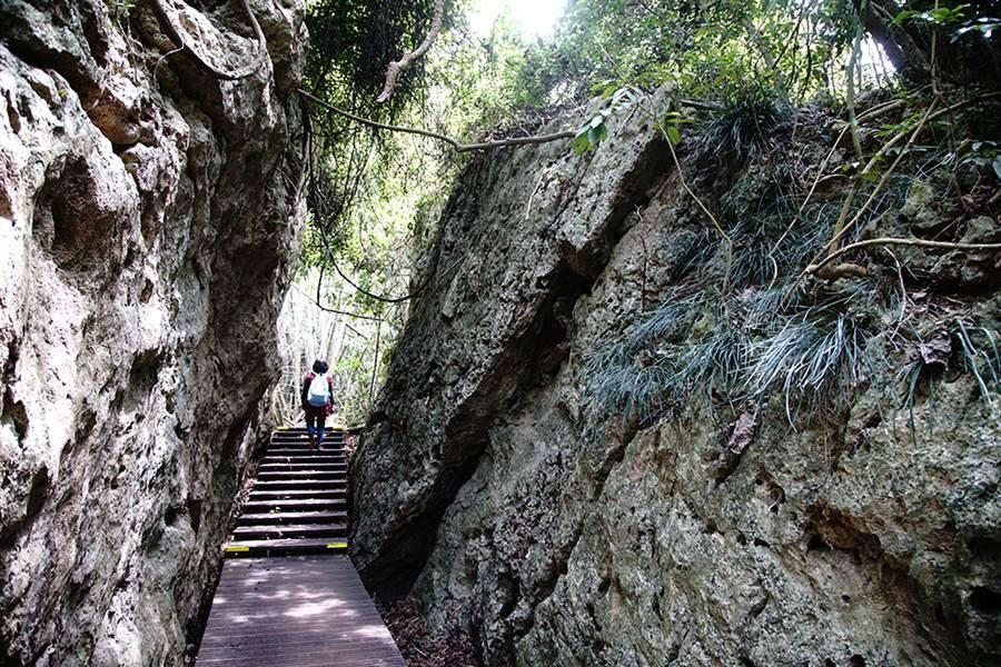 柴山被珊瑚岩覆蓋,這是在地殼上升的過程中,所形成的奇特景觀。(攝影/曾信耀)
