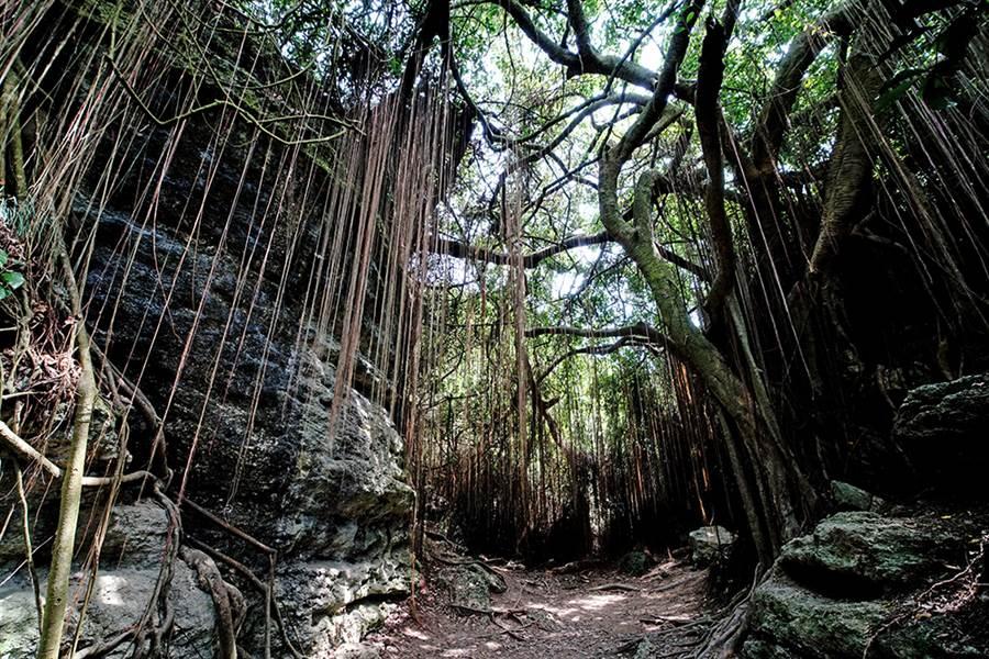 探訪柴山IG打卡秘境熱點,果真是傳說中的一簾幽夢。(攝影/曾信耀)