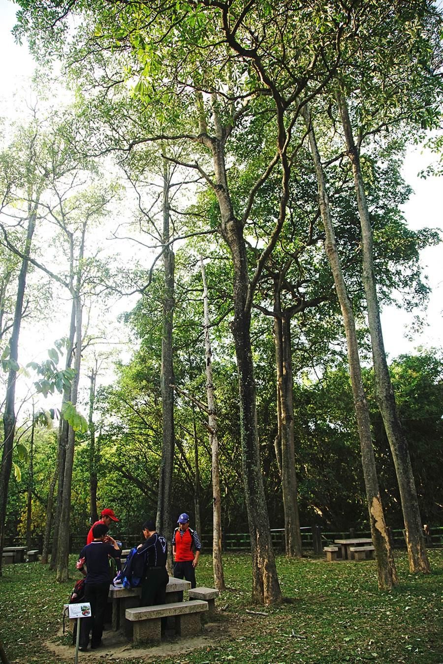 環保公園環境清幽,令人心曠神怡。(攝影/曾信耀)