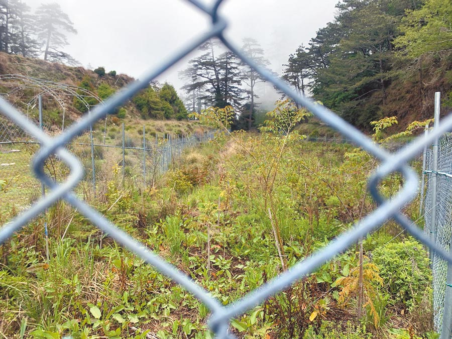 丹大架設圍籬種樹,被誤以為是在養水鹿!(廖志晃攝)