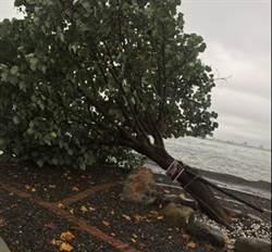 高雄市境之南「國瑜樹」遭暴雨襲倒 公所急救回