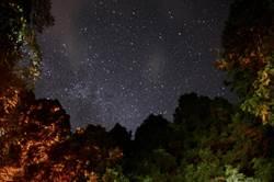 新竹林管處活動讓民眾一探山林中寶藏