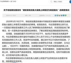 大地震前兆?廣東上千條黑魚「跳上岸」 官方調查結果出爐