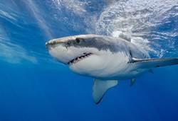 男釣魚遇海豚超嗨 爸一看驚覺不妙
