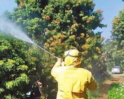 竹市荔枝節 防蟲超前部署