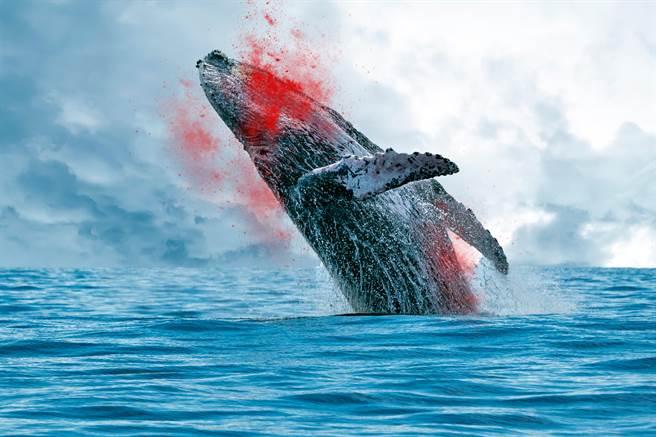 猛鯊與食人鱷罕見合作 狠咬巨鯨(示意圖/達志影像)