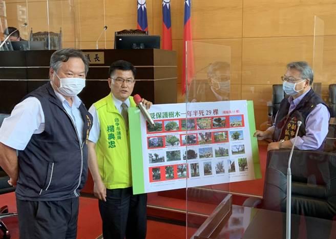市議員楊典忠(中)贈副市長令狐榮達(右)老樹生前照片,為台中市的老樹請命。(陳世宗攝)