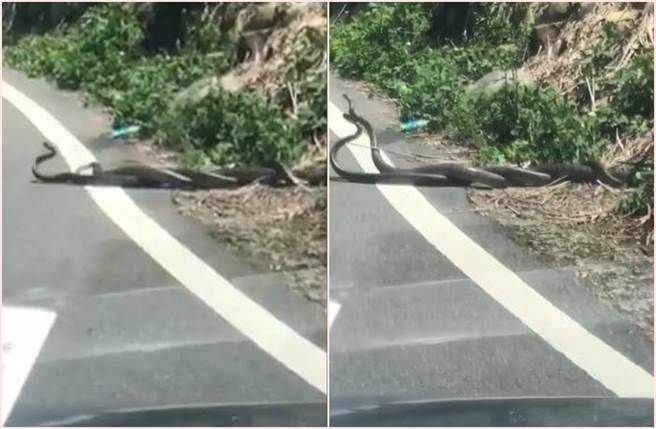 2巨蛇馬路糾纏「雙修」 當街活春宮駕駛看傻