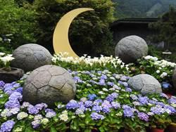 夢幻繽紛 竹子湖繡球花地景設計登場